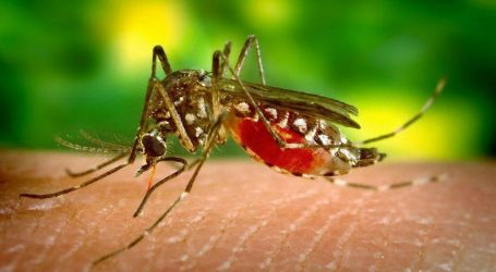 Health officials to launch 'Mosquito Control Week' to curb the spread of Dengue